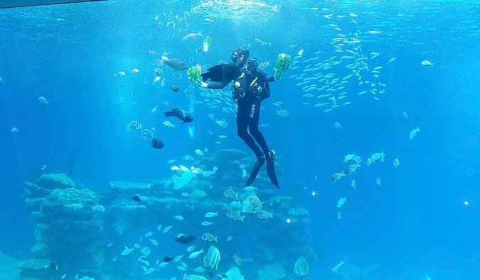 Un plongeur dans les eaux claires de la Méditerranée d'Israël