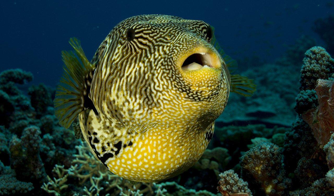 poissons tropicaux en Afrique du Sud