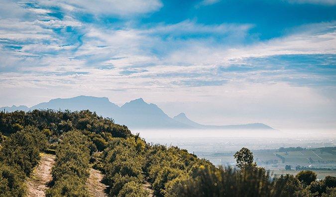dégustation de vins en Afrique du Sud