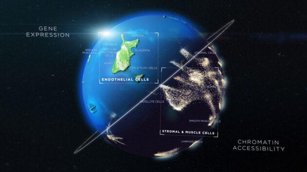 Atlas de cellules visualisés